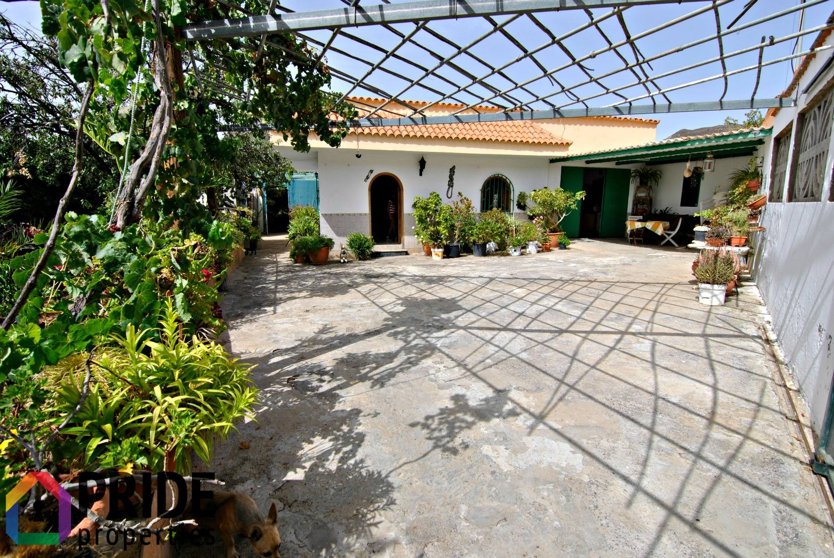 Finca with fruit trees in Tunte